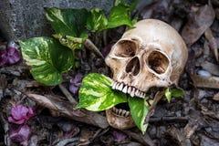 La vie toujours avec le crâne Photographie stock