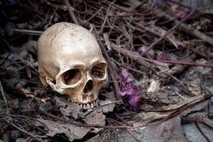 La vie toujours avec le crâne Photographie stock libre de droits
