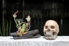 La vie toujours avec le crâne et l'orchidée sur le bois dans la nuit avec le fond de dak Photographie stock libre de droits