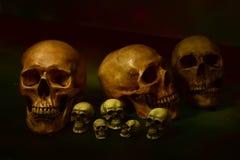 La vie toujours avec le crâne, foyer sélectif Photos libres de droits
