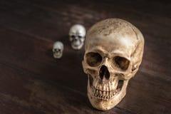 La vie toujours avec le crâne humain Photos libres de droits