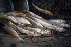 La vie toujours avec le poisson cru Images libres de droits