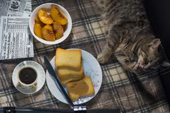 La vie toujours avec un chat, pain grillé, photos libres de droits