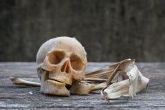La vie toujours avec un crâne humain Image stock