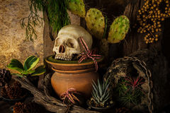 La vie toujours avec un crâne humain avec des usines de désert Image stock