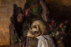 La vie toujours avec un crâne humain avec des usines de désert, cactus, roses Photos libres de droits