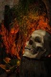 La vie toujours avec un crâne humain avec des usines de désert, cactus, roses Photo libre de droits