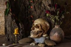 La vie toujours avec un crâne humain avec des usines de désert, cactus, roses Photographie stock libre de droits
