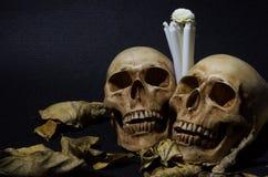 La vie toujours de deux crânes avec les feuilles sèches et la bougie blanche Image stock