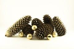 La vie toujours des cônes de pin Images libres de droits