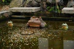La vie toujours des grenouilles Photographie stock