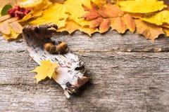 La vie toujours des ingrédients d'automne photographie stock libre de droits