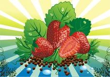 La vie toujours - les fraises sur la vigne part Photo libre de droits