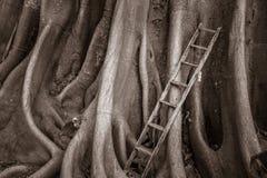 La vieille échelle en bois avec le banian enracine le fond, escalier au ciel Images stock
