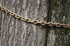 La vieille chaîne sur le tronc d'un vieil arbre, images stock