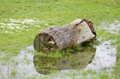 La vieille eau en bois d'identifiez-vous sur le fond d'herbe verte Parc dans Manch image stock