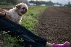 La vieille et laide fille de chien mais de propriétaire donnent l'amour et heureux Photo libre de droits