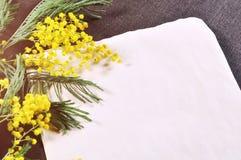 La vieille feuille de papier de vintage avec l'espace libre pour le texte près des fleurs pelucheuses jaunes colorées de mimosa s Photos libres de droits