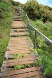 La vieille fougère a couvert le chemin en bois Photographie stock libre de droits
