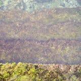La vieille manière en pierre d'escalier à l'eau de mer avec le vert suintent Photos stock