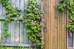 La vieille porte de vintage avec du raisin sauvage laisse horizontal Images libres de droits