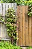 La vieille porte de vintage avec du raisin sauvage part de la verticale Photo libre de droits