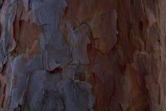 La vieille texture en bois brune Photos libres de droits
