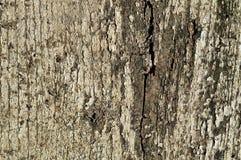 La vieille texture en bois a fendu avec la peinture blanche épluchée Photo stock