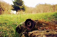 La vieillesse et la nature photo stock