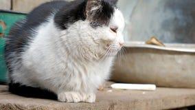 La vieja sentada blanco y negro del gato piensa metrajes