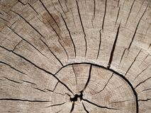 La vieja textura de la corteza en primer Foto de archivo