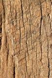 La vieja textura de madera, cierra el â para arriba. Fotos de archivo libres de regalías