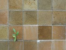 La vieja textura de la pared de la teja fotografía de archivo libre de regalías