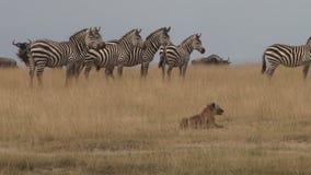 La vigilancia en el salvaje mantiene animales seguros metrajes