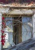 La vigne a couvert la fenêtre Image stock