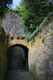 La vigne a couvert l'escalier Irlande Photo stock