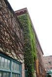 La vigne a couvert l'immeuble de brique Photo libre de droits