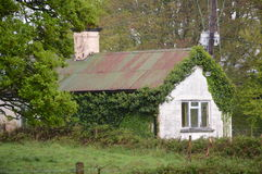 La vigne a couvert le cottage en parc national de Killarney, Irlande Images stock