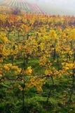 La vigne d'automne Images stock