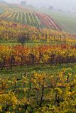 La vigne d'automne Image libre de droits