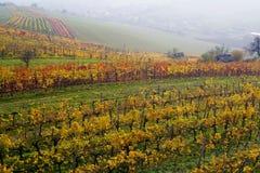 La vigne d'automne Photos libres de droits