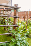 La vigne dans le sens le plus étroit est vigne Images libres de droits