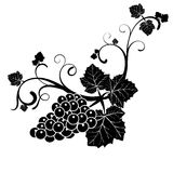 La vigne dans le style de vintage illustration libre de droits