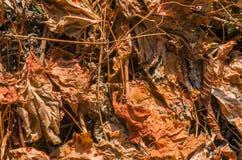 La vigne sèche part du fond Photos stock