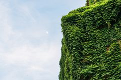 La villa italienne à Milan a couvert dans de belles feuilles vertes pendant le printemps, d'espace de copie contre le ciel bleu photographie stock