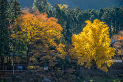 La ville de Mitake et la rivière de Tama en automne assaisonnent Photo stock