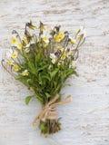 La viola selvaggia fiorisce il mazzo legato con la corda della iuta immagine stock