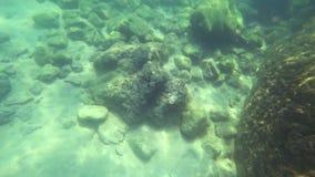 La visión de primera persona, un hombre nada debajo del agua que mira el mundo subacuático y los pequeños pescados tropicales almacen de metraje de vídeo