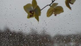 La visión desde la ventana de la casa de campo en paisaje del invierno y nieve que cae almacen de metraje de vídeo