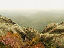 La visión en el valle brumoso profundo, picos de árboles aumentó de la niebla del otoño Imágenes de archivo libres de regalías
